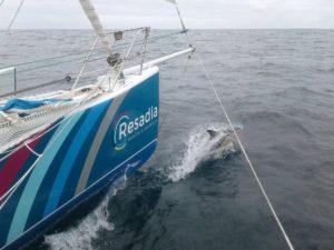 Sympa de naviguer avec les cétacés